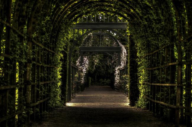 Ogród mojej pasji